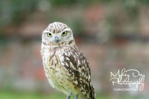 Wedding-Owls-and-Falconry-in-Kent-and-East-Sussex-Entertainment-Article-5-300x200 Wedding Entertainment Ideas