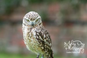 Wedding-Owls-and-Falconry-in-Kent-and-East-Sussex-Entertainment-Article-6-300x200 Wedding Entertainment Ideas